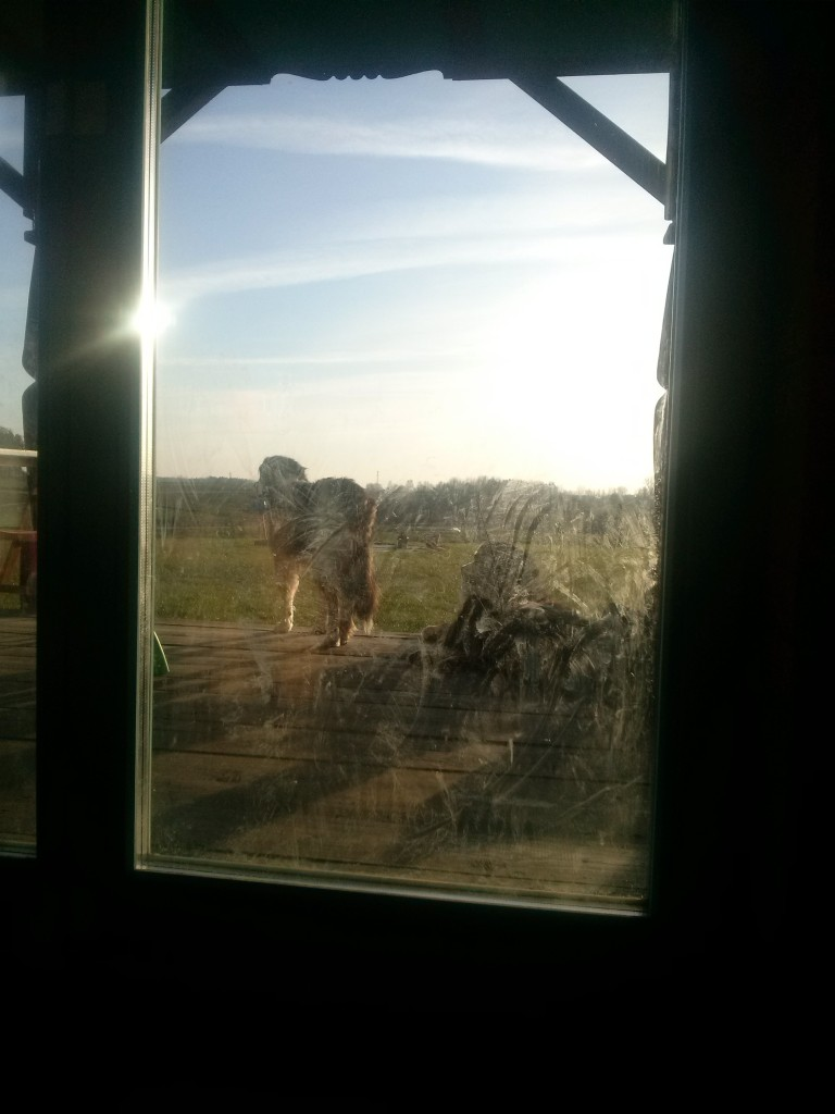 brudne-okno-tarasowe