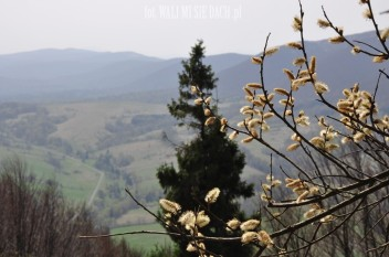 wiosna w Bieszczadach