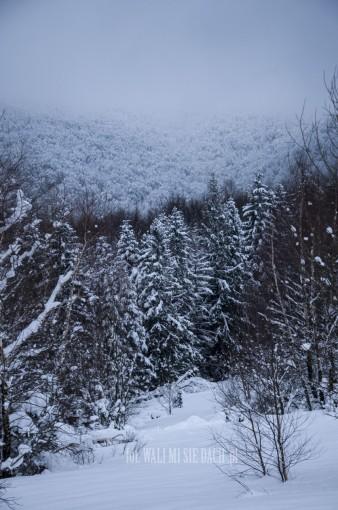 Rawki zimą