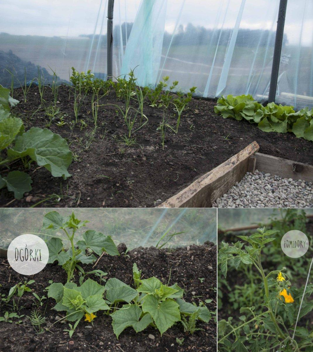 warzywniak2014-002